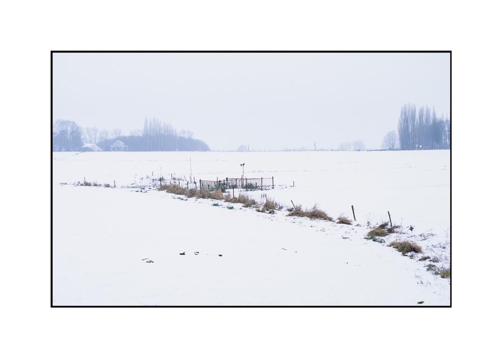 Weideland im Winter, Grieth